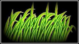 green-grass-blade2